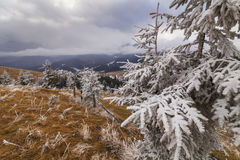 Heavy frost in the mountains Royalty Free Stock Photos