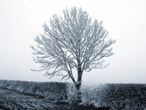 Heavy frost on tree Royalty Free Stock Photography