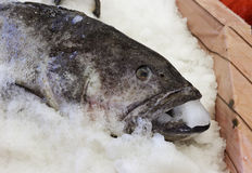 Heavy frozen grouper Stock Photos