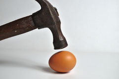 Heavy hammer on the way to crash an egg. Conceptual themes Royalty Free Stock Photo