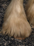 Heavy Horse Feathers Stock Images