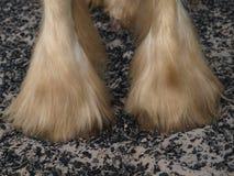 Heavy Horse Feathers Stock Photos