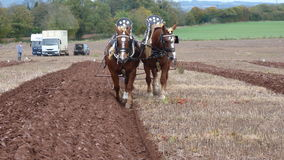 Heavy Horses at a Ploughing Match in England Royalty Free Stock Photography