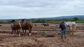 Heavy Horses at a Ploughing Match in England. Heavy Horses at an Annual Ploughing Match event  in Somerset South West England Stock Photography