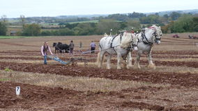 Heavy Horses at a Ploughing Match in England. Heavy Horses at an Annual Ploughing Match event  in Somerset South West England Stock Photo