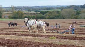 Heavy Horses at a Ploughing Match in England Royalty Free Stock Image