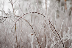 Heavy ice bending branches Stock Image