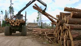 Heavy lifting crane loading cut wooden logs. Loading of timber. Loader in work