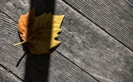 Strong Shadow Cast on Falled Autumn Leaf - Abstract. The Heavy Lines of a Late Day Shadow Falling Across an Autumn Leaf Mix with Wooden Floor Boards to Create Royalty Free Stock Photo