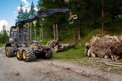 Heavy logging equipment harvesting forest