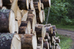 Heavy logs stacked up in a forest. Logs waiting to get loaded ona forest truck Stock Photography