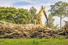 Heavy machine lifting logs - used for deforestation in clearing / Excavator Stock Photo