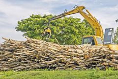 Heavy machine lifting logs - used for deforestation in clearing / Excavator Royalty Free Stock Photo