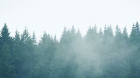 Mist Moving Over Row Of Trees. Heavy mist moving over forest trees stock video footage