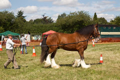 Heavy plough horse event Stock Photography