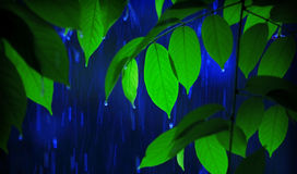 Heavy Rain. Close up of a green leaves in the rain Royalty Free Stock Photography