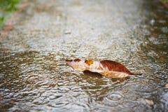 Free Heavy Rain Stock Photo - 34496150