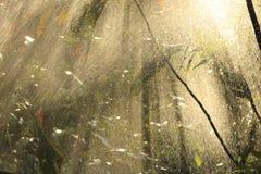 Heavy rain against the sun. Royalty Free Stock Photos