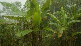 Heavy rain amazonian storm stock footage