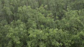 Heavy rain on a background of oak forest.  stock video