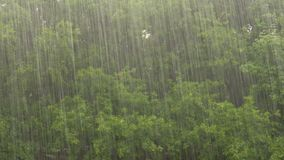 Heavy rain on a background of oak forest.  stock footage