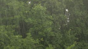 Heavy rain on a background of trees. Linden, maple and oak.  stock video footage