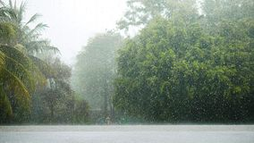 Heavy rain in the beautiful landscape and nature of the rain forest in Phuket, Thailand. It`s a good place for travel and relaxin. A Heavy rain in the beautiful royalty free stock photography
