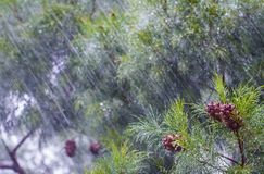 Heavy rain Stock Images