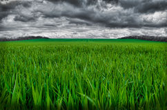 Heavy rain is coming soon on green field Royalty Free Stock Photography