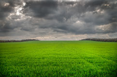 Heavy rain is coming soon on green field Royalty Free Stock Images