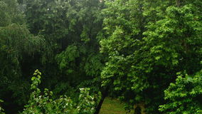 Heavy rain falling in the park, trees in the background. Royalty Free Stock Image