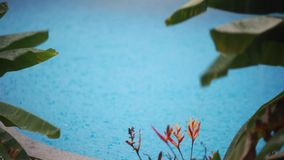 Heavy rain falls into a swimming pool and leaves of the flower with change of a focus to blurred. 1920x1080. Hd stock footage