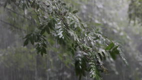 Heavy rain falls on the tree branches. And bushes stock video