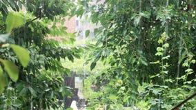 Heavy rain among the foliage. Heavy rain running among the foliage of the trees, in the background house stock video footage