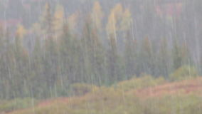 Heavy rain in forest rack focus stock footage