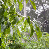 Heavy rain in the garden Royalty Free Stock Photography