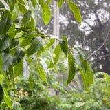 Heavy rain in the garden Royalty Free Stock Photography