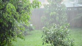 Heavy rain in the garden. Rain forest. Rain garden. Tropical rain. Rain leaves background. Rainy wet weather. Rain weather eco. Rain storm green. Rain summer stock video