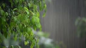 Heavy rain in the garden. Rain forest. Rain garden. Tropical rain. Rain leaves background. Rainy wet weather. Rain weather eco. Rain storm green. Rain summer stock video footage