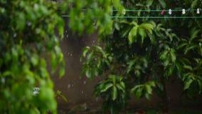 Heavy rain in the garden. Rain forest. Rain garden. Tropical rain. Rain leaves background. Rainy wet weather. Rain weather eco. Rain storm green. Rain summer stock footage