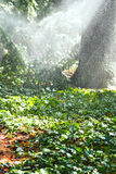 Heavy rain in garden in sunny autumn day Stock Photography