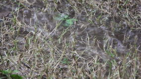Heavy Rain Makes Water Inundated On Dry Grass stock footage