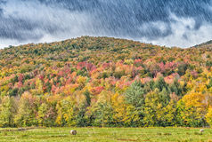 Heavy rain on New England foliage scenario Stock Image