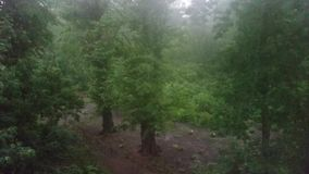 Heavy rain in the park stock footage