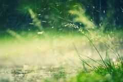 Heavy rain Royalty Free Stock Photography