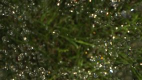 Heavy Rain Pouring Down on  the Green Grass Shot on Phantom and Laowa stock video footage
