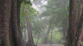 Heavy rain in the rainforest stock footage