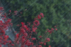 Heavy rain Royalty Free Stock Images
