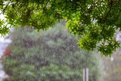 Heavy rain starting over a stream with tree during heavy wind Royalty Free Stock Photography