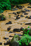 After a heavy rain storm, muddy brown water runoff fills a small stream Stock Photo